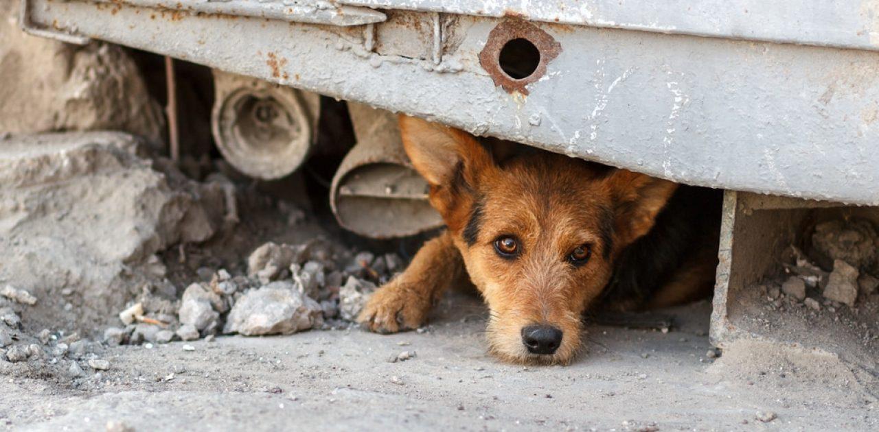 cão de rua 02
