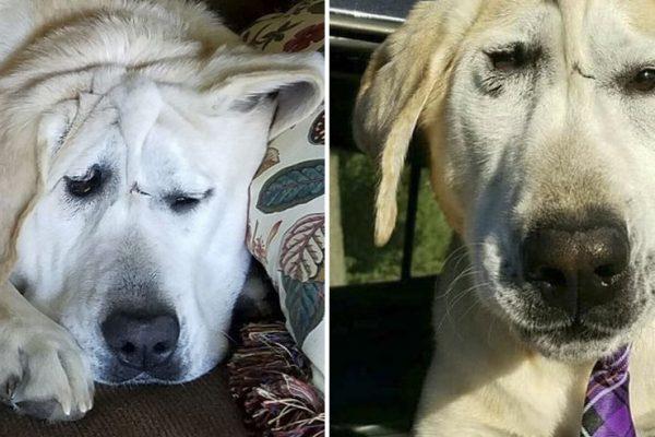 cão deficiente capa
