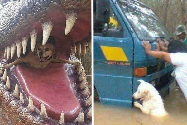 cão feliz capa