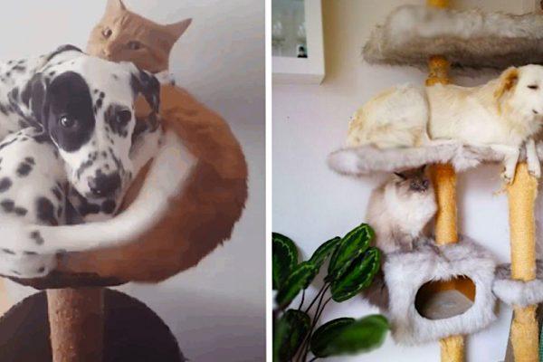 cão gato capa