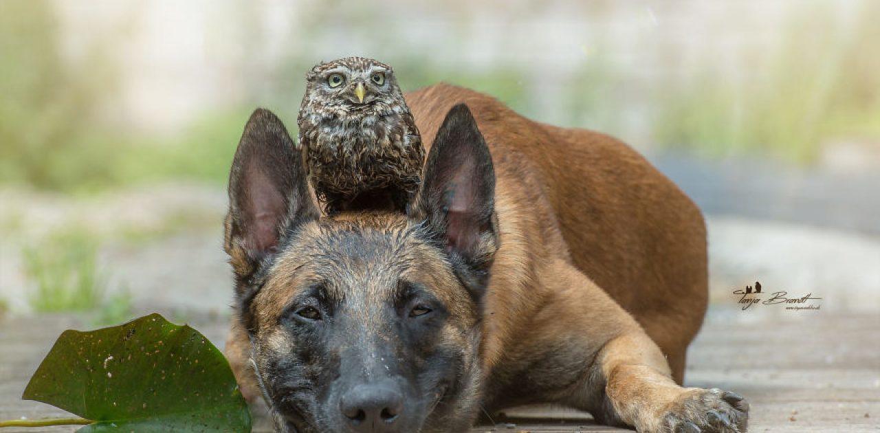 cachorro e coruja 10