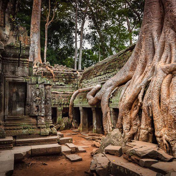 Raizes também abraçaram alguns locais em Angkor, Camboja