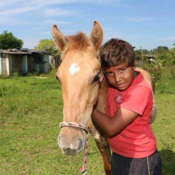 cavalo 01