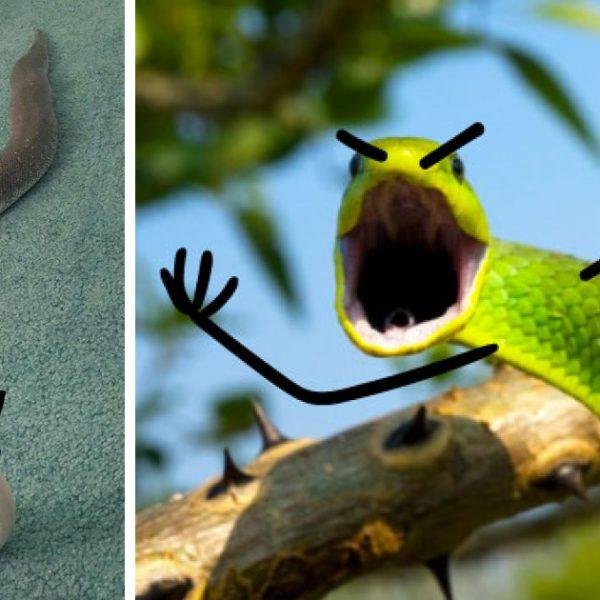 cobras divertidas 17capa
