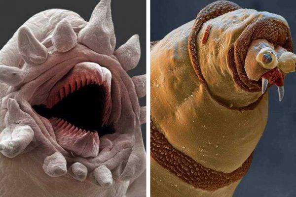 criaturas microscópicas capa