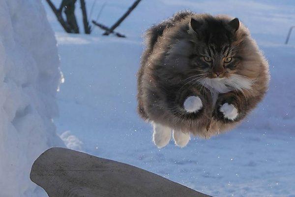 curtindo a neve capa