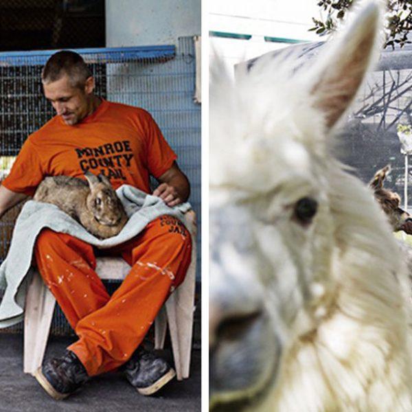 detentos e animais capa