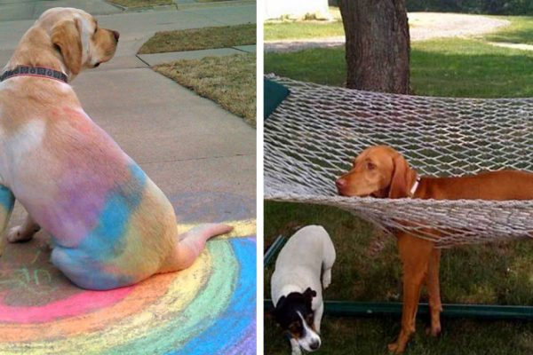 dogs-who-made-poor-life-choices-fb1