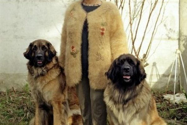 dogwool-photography-erwan-fichou-dog-owners-wearing-clothes-fur-of-their-dogs8