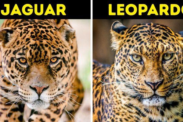 espécies iguais capa