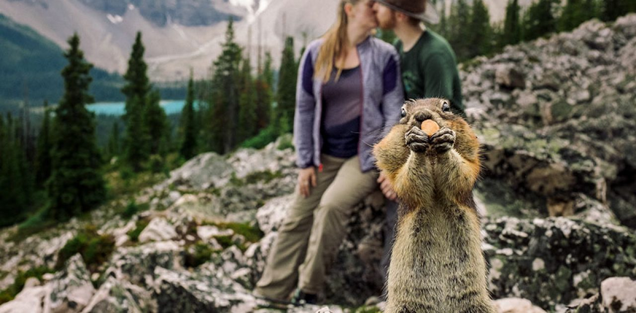 esquilo na foto 01