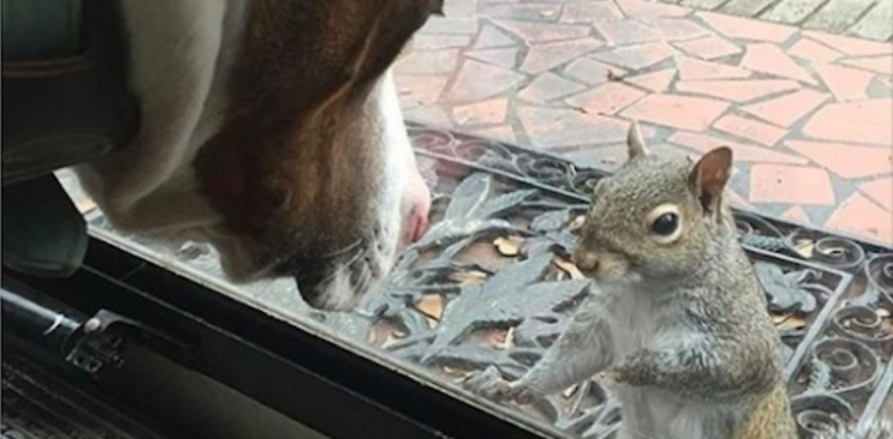 esquilo na janela capa