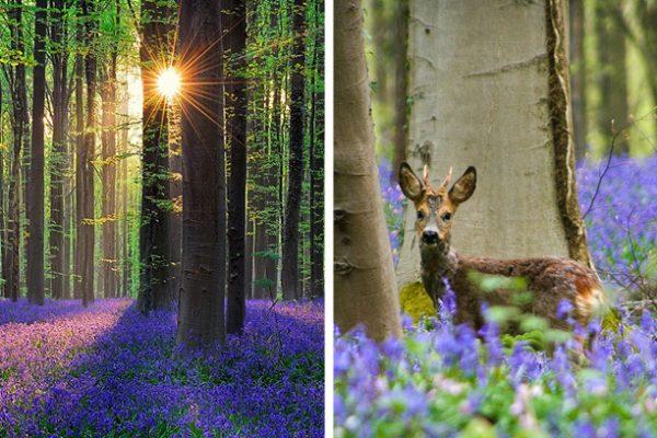floresta encantada capa