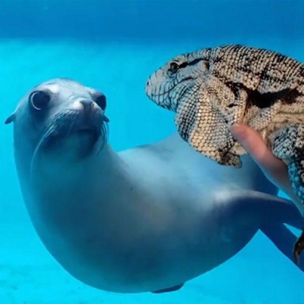 foca no aquário 01