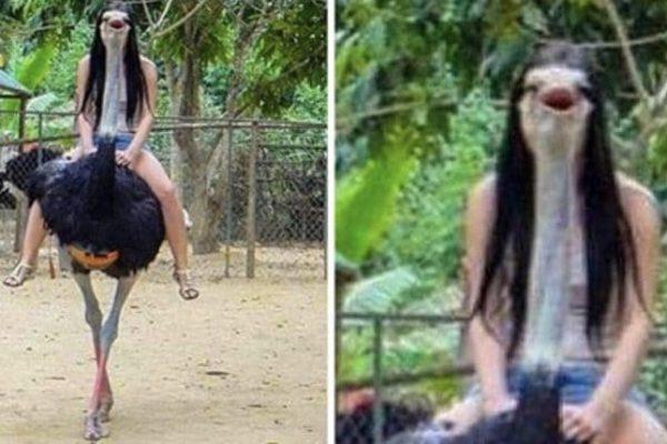 fotos de animais capa