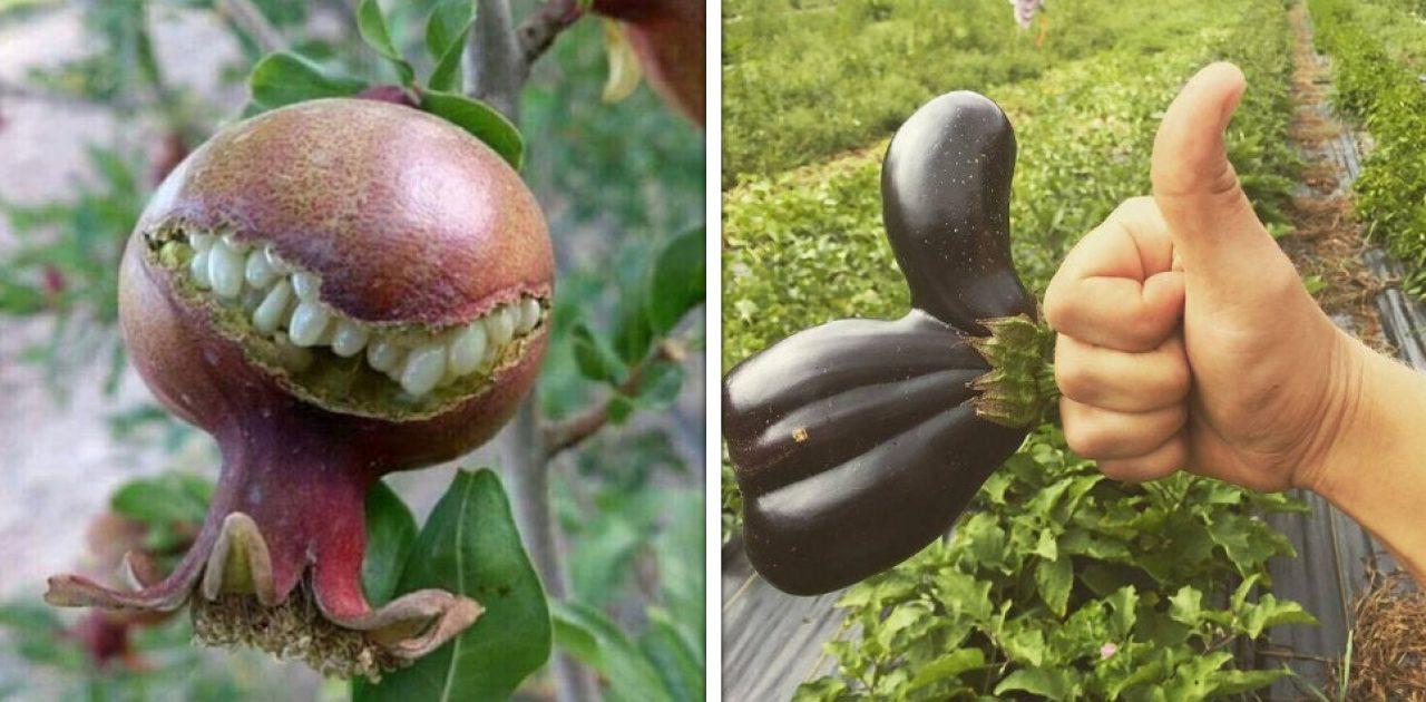 frutas e verduras capa