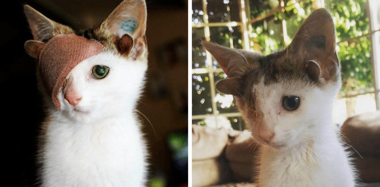 gatinho de quatro orelhas capa