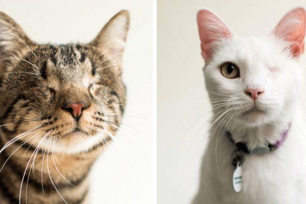 gatinhos cegos capa