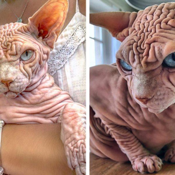 gato diferente capa