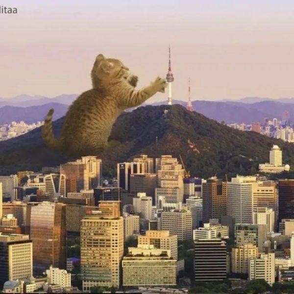 gato gigante 03