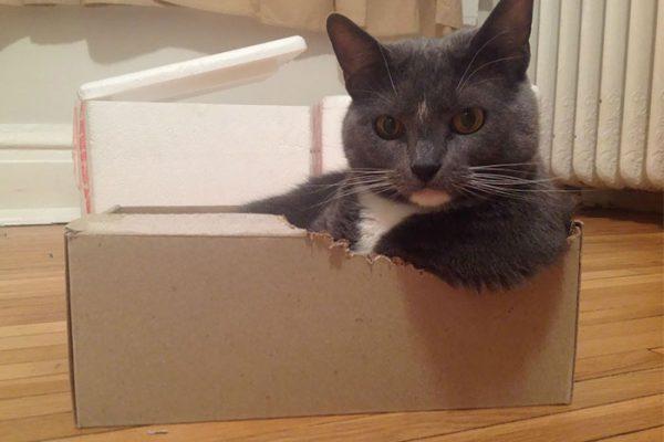 gato na caixa 01