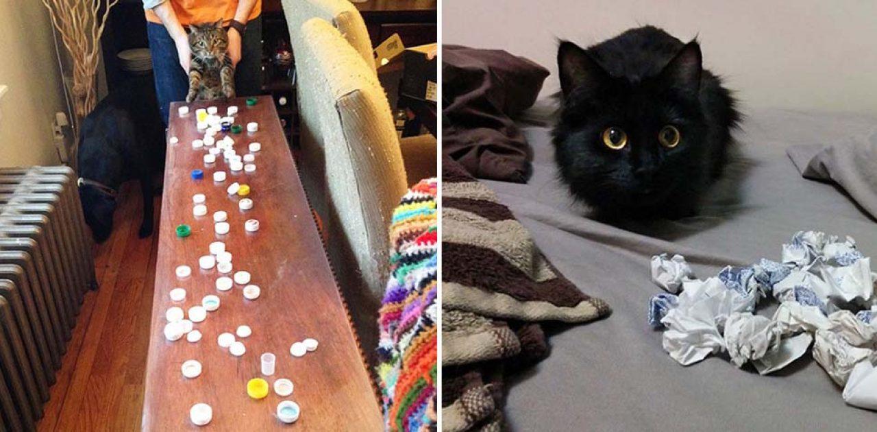 gatos colecionadores capa