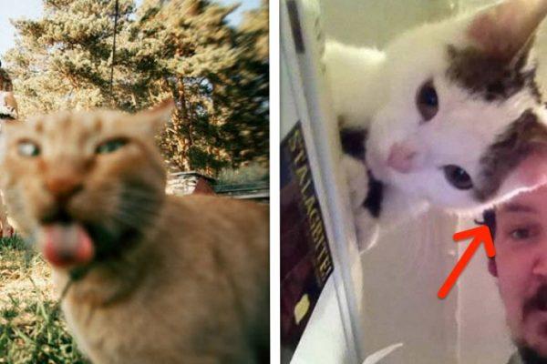 gatos intrometidos capa