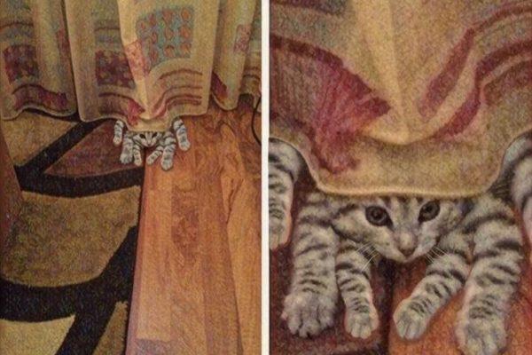 gatos trolladores 01