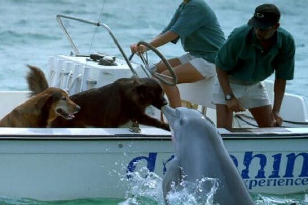 golfinho e cão 01