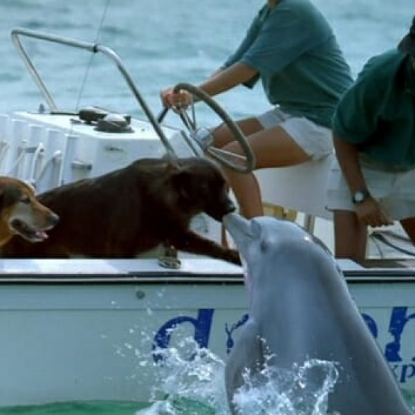 golfinho e cachorro 01