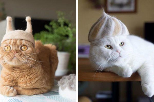 gorro de gatinhos capa