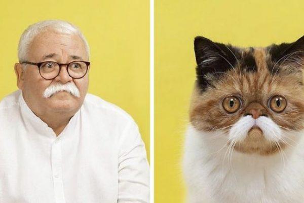 humano e gato capa