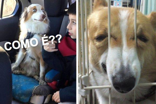 ida ao veterinario capa