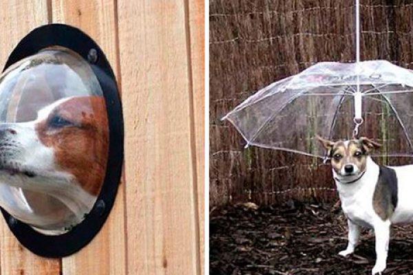 ideias para seu cachorro capa