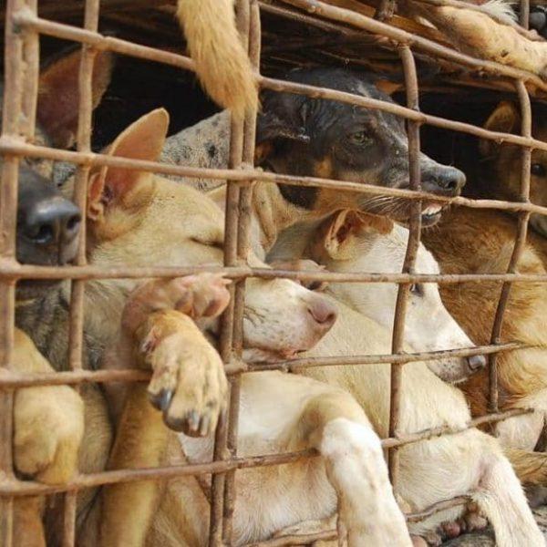 inferno vivido por cães capa