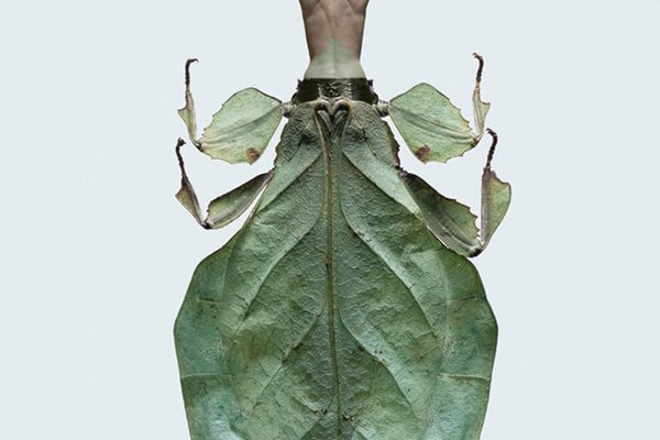 laurent-seroussi-insectes-women-insects-hybrids-03