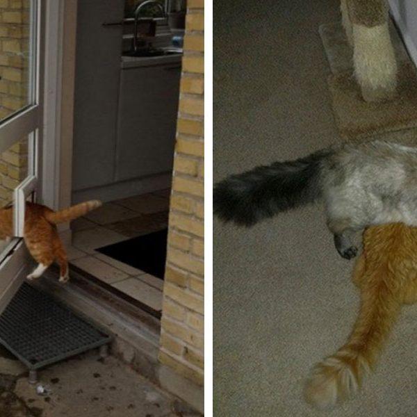 logica-dos-gatos