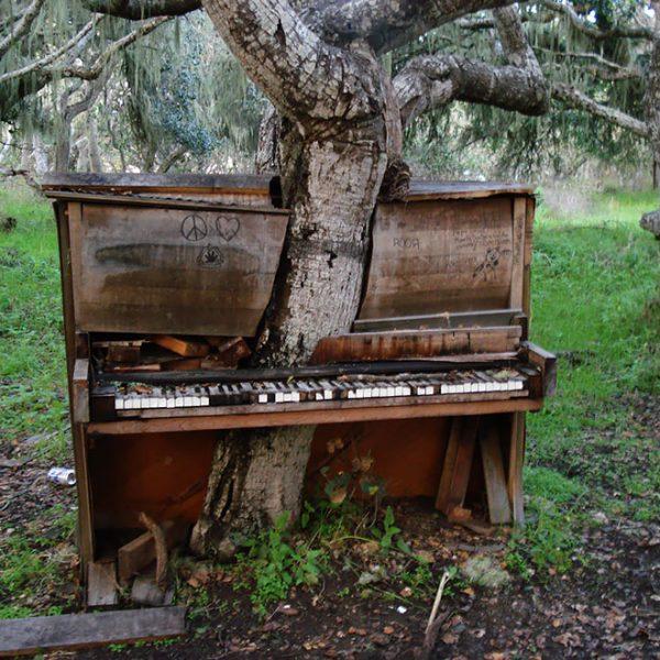 A ávore de piano, Califórnia.