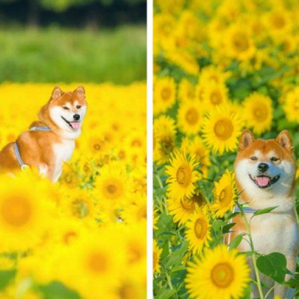 no meio das flores capa