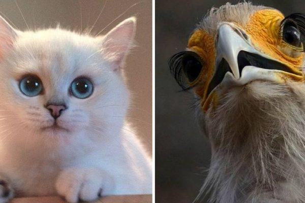 olhos de animais capa