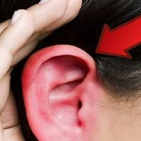 orelha vermelha capa