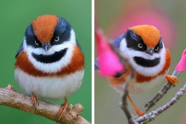 pássaro colorido capa