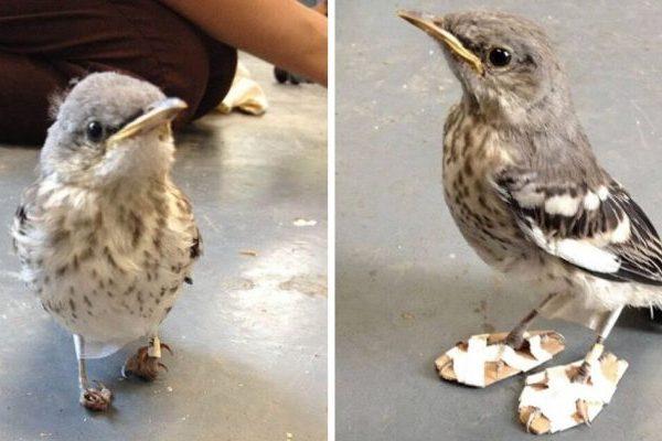 pássaro deficiente capa