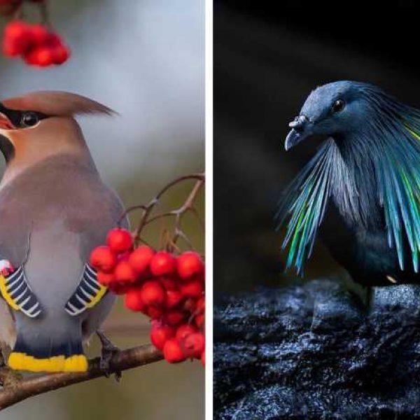 pássaros exuberantes capa