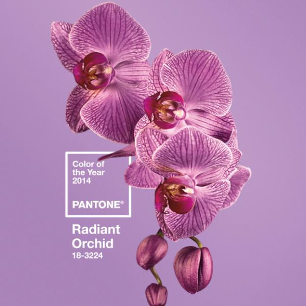 pantone color of 2014