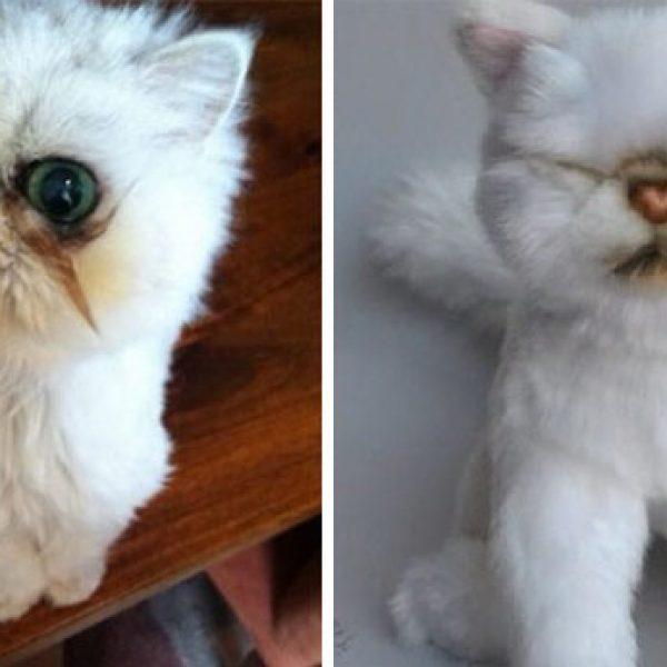 pet-copy-custom-plush-toys-cuddle-clones-24