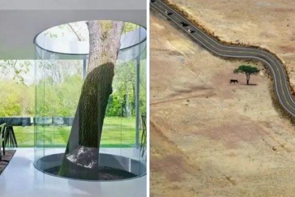 preservar árvore capa