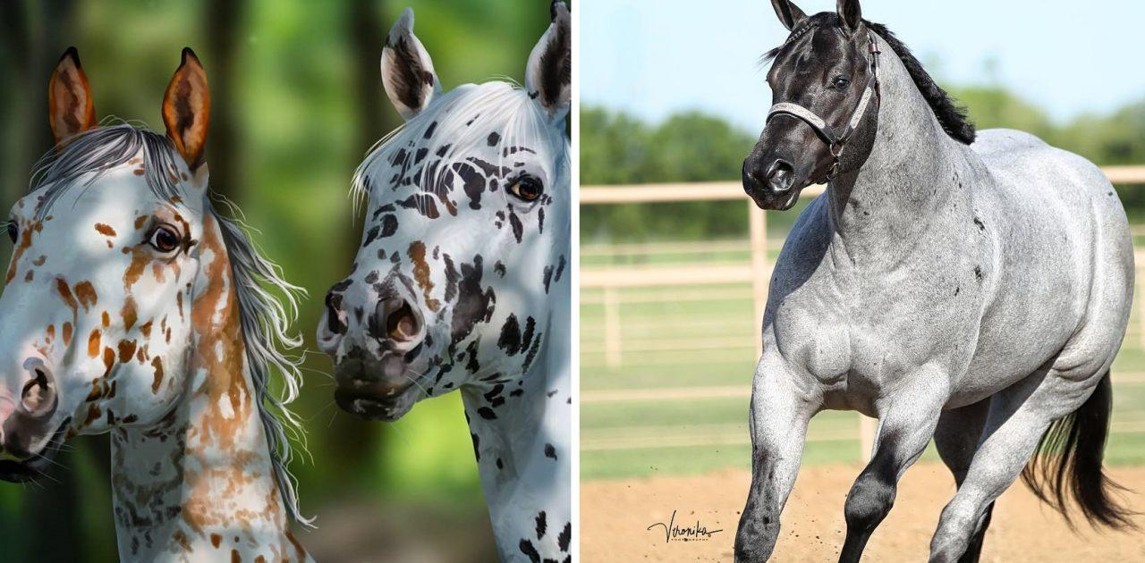 raças de cavalo capa
