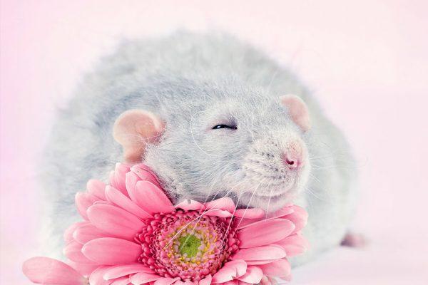 ratinhos 10