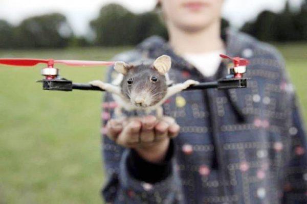 O (aqui jaz) rato voador